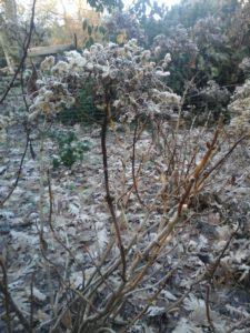 Conseil du mois de Janvier au jardin
